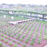 【停止中】水郷佐原水生植物園ライブカメラ(千葉県香取市扇島)
