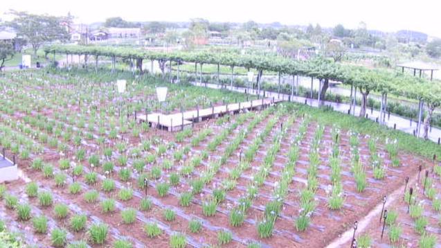 水郷佐原水生植物園から園内開花状況が見えるライブカメラ。