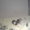 世界の名犬牧場子犬の子育てルーム第2ライブカメラ(群馬県前橋市富士見町)