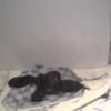 世界の名犬牧場子犬の子育てルーム第1ライブカメラ(群馬県前橋市富士見町)