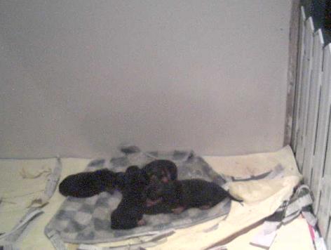 世界の名犬牧場から子育てルームが見えるライブカメラ。