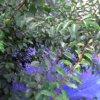 岡畑農園梅畑近景ライブカメラ(和歌山県田辺市上芳養)