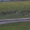 【調整中】水生植物公園みずの森琵琶湖ライブカメラ(滋賀県草津市下物町)