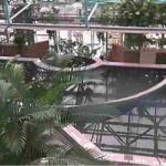 【調整中】水生植物公園みずの森温室ライブカメラ(滋賀県草津市下物町)