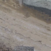 多々良海岸カブトガニライブカメラ(佐賀県伊万里市木須町)