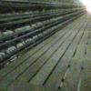 横浜ファーム君津農場鶏舎ライブカメラ(千葉県君津市山滝野)