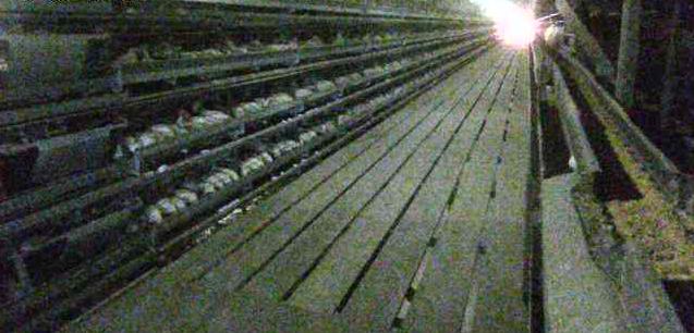 横浜ファーム君津農場鶏舎ライブカメラは、千葉県君津市山滝野の横浜ファーム君津農場に設置された鶏舎が見えるライブカメラです。