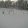 北海道大学低温科学研究所融雪観測室ライブカメラ(北海道幌加内町母子里)