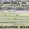 豊平川雁来水位観測所ライブカメラ(北海道札幌市白石区)