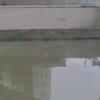 神田川飯田橋水位観測所ライブカメラ(東京都文京区後楽)