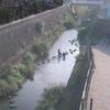 三沢川天宿橋ライブカメラ(神奈川県川崎市多摩区)