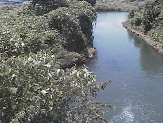 鳩川海老名分水路ライブカメラは、神奈川県海老名市上郷の海老名分水路に設置された鳩川が見えるライブカメラです。