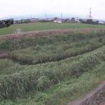 歌川源氏橋ライブカメラ(神奈川県伊勢原市小稲葉)