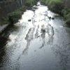 いたち川水神橋ライブカメラ(神奈川県横浜市栄区)