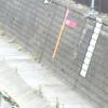 妙正寺川双鷺橋水位観測所ライブカメラ(東京都中野区若宮)