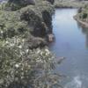 鳩川海老名分水路ライブカメラ(神奈川県海老名市上郷)