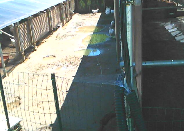 自然エネルギーファーム温故知新ライブカメラは、茨城県行方市次木の自然エネルギーファーム温故知新に設置された養鶏場が見えるライブカメラです。