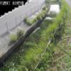 高塚川枇杷橋ライブカメラ(静岡県浜松市南区)