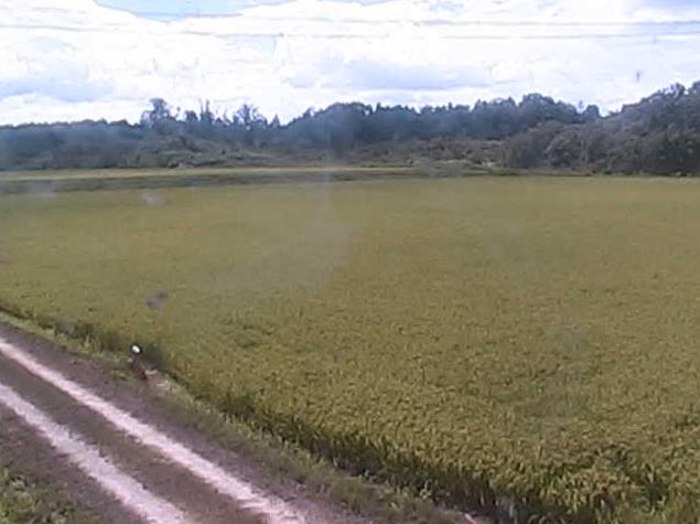 中道農園ライブカメラは、滋賀県野洲市比留田の中道農園に設置された水田・野鳥が見えるライブカメラです。