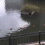 カルガモプロジェクトカルガモの巣周辺ライブカメラ(東京都港区芝浦)