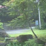 ブナの実新潟県道63号方面ライブカメラ(群馬県みなかみ町藤原)