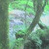 ブナの実湯ノ小屋第3ライブカメラ(群馬県みなかみ町藤原)