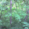 ブナの実湯ノ小屋第2ライブカメラ(群馬県みなかみ町藤原)