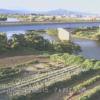 赤川おばこ大橋ライブカメラ(山形県三川町猪子)