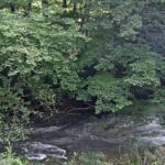 花園川上流ライブカメラ(茨城県北茨城市関本町)