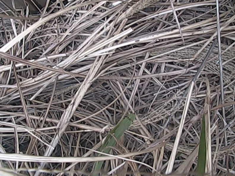 カルガモプロジェクトカルガモの巣の中ライブカメラ(東京都港区芝浦)