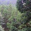 英彦山神宮社務所ライブカメラ(福岡県添田町英彦山)