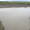 牛津川三王崎排水機場Bライブカメラ(佐賀県小城市芦刈町)