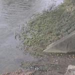 七谷川水位観測所ライブカメラ(京都府亀岡市河原林町)