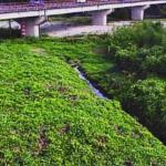 愛知川八幡橋ライブカメラ(滋賀県東近江市今町)