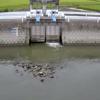 牛津川友田排水機場ライブカメラ(佐賀県小城市牛津町)