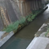 妙法寺川村雨橋ライブカメラ(兵庫県神戸市須磨区)