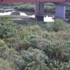 明石川上明石橋ライブカメラ(兵庫県神戸市西区)