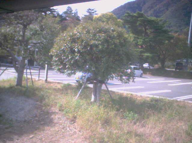 ヤホール前ライブカメラは、新潟県弥彦村弥彦のヤホールに設置された駐車場が見えるライブカメラです。