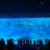 【停止中】沖縄美ら海水族館黒潮の海ライブカメラ(沖縄県本部町石川)