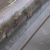 下大鳥居排水機場ライブカメラ(山梨県市川三郷町下大鳥居)