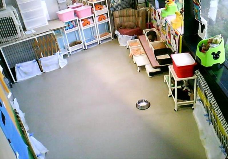 わんわんコインランドリー柏店第2ライブカメラは、千葉県柏市塚崎のわんわんコインランドリー柏店(わんわん柏)に設置された店内が見えるライブカメラです。