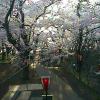 ICT高遠城址公園ライブカメラ(長野県伊那市高遠町)
