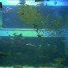上越市立水族博物館ライブカメラ(新潟県上越市西本町)
