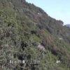 由比さった峠富士山ライブカメラ(静岡県静岡市清水区)