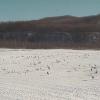 【冬期限定】タンチョウ観察センターライブカメラ(北海道釧路市阿寒町)