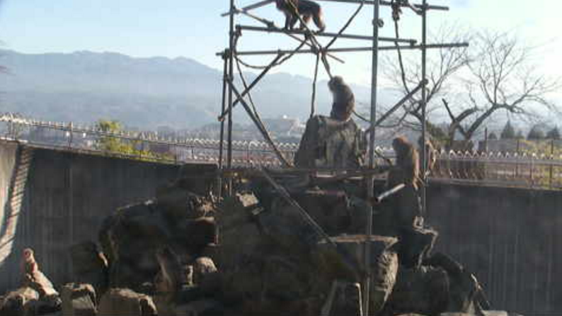 ICTV飯田市立動物園サル山ライブカメラ(長野県飯田市扇町)