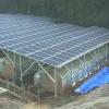 トミオ太陽光発電所エミューライブカメラ(千葉県成田市十余三)