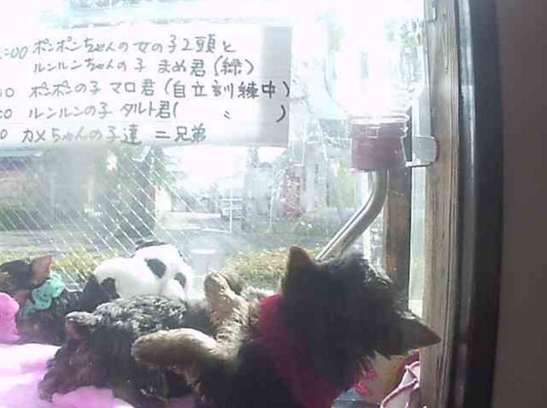 ペットサロンペペライブカメラ(神奈川県茅ヶ崎市小和田)