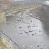 千里川春日橋ライブカメラ(大阪府豊中市桜の町)