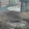 川田川中央橋ライブカメラ(徳島県吉野川市山川町)